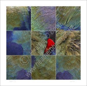 Takahe 9.1
