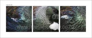 Tui Feathers 3.2