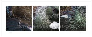 Tui feathers 3.1