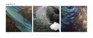 Tui Feathers 3.3