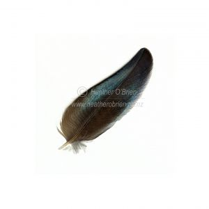 Tui Single Feather