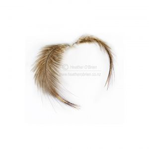 North Island Brown Kiwi Feathers